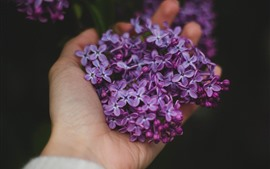 Preview wallpaper Many lilac flowers, hand