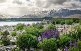 Nueva Zelanda, montañas, flores, lago, piedras, bosque