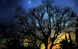 Night, moon, tree, silhouette