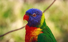 Preview wallpaper Parrot, head, bird, colorful feathers