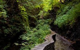 Aperçu fond d'écran Chemin, plantes, pierres, montagne