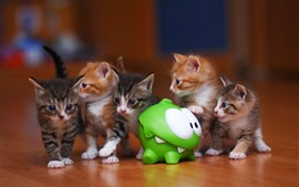 Some kittens and frog toy