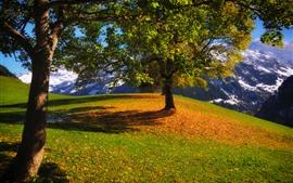 Preview wallpaper Trees, mountain, grass, snow, sunshine, shadow