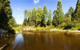 Árvores, rio, sol, cenário da natureza