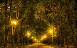 Preview wallpaper Trees, road, lights, night