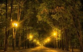 Árvores, estrada, luzes, noite