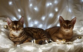 Preview wallpaper Two cats, lights