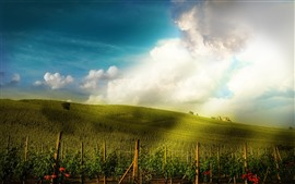 Preview wallpaper Vineyard, slope, houses, sunshine