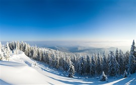Preview wallpaper Winter, snow, forest, trees, mountain top, sunshine