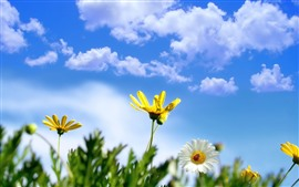 Preview wallpaper Yellow and white daisy, ladybug, blue sky, clouds