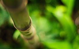 Bamboo, green, hazy