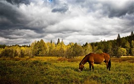 Preview wallpaper Brown horse eat grass, trees, clouds