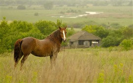 Preview wallpaper Brown horse look back, grass, hut