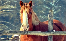 Brown horse, look, face, fence