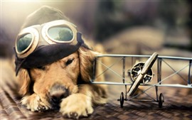 Preview wallpaper Funny dog, pilot, plane