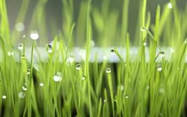 Зеленая трава, роса, природа