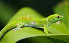 Preview wallpaper Green lizard, green leaf, wildlife