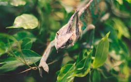 Игуана, рептилия, ящерица, зеленые листья, дымка