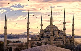 Preview wallpaper Istanbul, Turkey, mosque, seagull, dusk