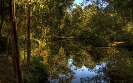 Lake, forest, trees, clear water, nature, reflection