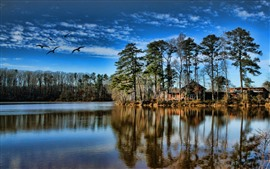 Lake, trees, houses, water reflection, blue sky, birds
