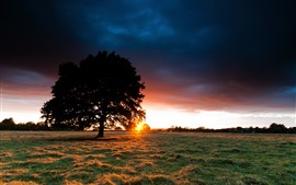 Lonely tree, sunset, clouds, grass