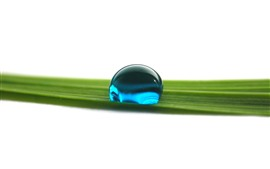 One blue water droplet, green grass leaf