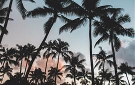 Palmeras, silueta, nubes, anochecer