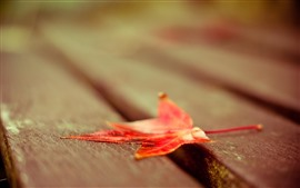 Preview wallpaper Red maple leaf, bench, hazy