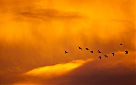 Preview wallpaper Sunset, birds, clouds, sky, orange color