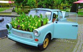 Preview wallpaper Car, daffodils