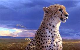 Chita, rosto, animais selvagens, nuvens, crepúsculo