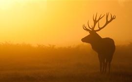 Veado, nevoeiro, manhã, nascer do sol