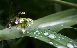 Роса, зеленый лист, маленькие цветы