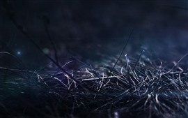 Preview wallpaper Dry grass, bushes, darkness