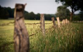 預覽桌布 籬笆,草,朦朧