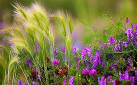 Grass and pink flowers, summer