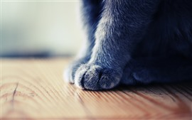 Photographie macro de patte de chat gris