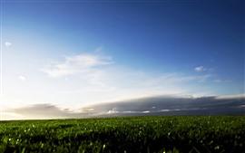 Campo verde, nuvens, céu