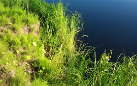 Preview wallpaper Green grass, pond