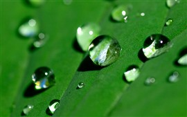 Preview wallpaper Green leaf surface, some water droplets