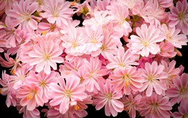 Many pink flowers, petals, bright
