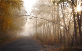 Preview wallpaper Morning, road, trees, fog, sun rays
