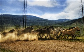 Cavalos de um rebanho, correndo
