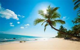Пальмы, пляж, море, солнечные лучи, тропика, голубое небо