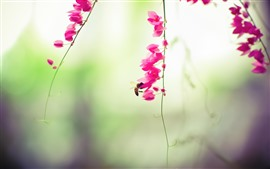 Preview wallpaper Pink flowers, bee