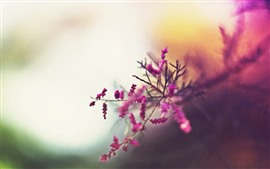 Preview wallpaper Pink little flowers, twigs, hazy