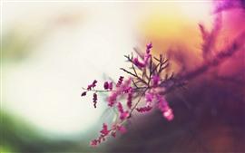 Pequeñas flores rosadas, ramitas, brumosas