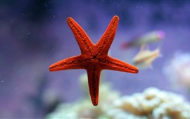 Preview wallpaper Red starfish