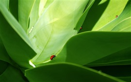Some ladybugs, green leaves